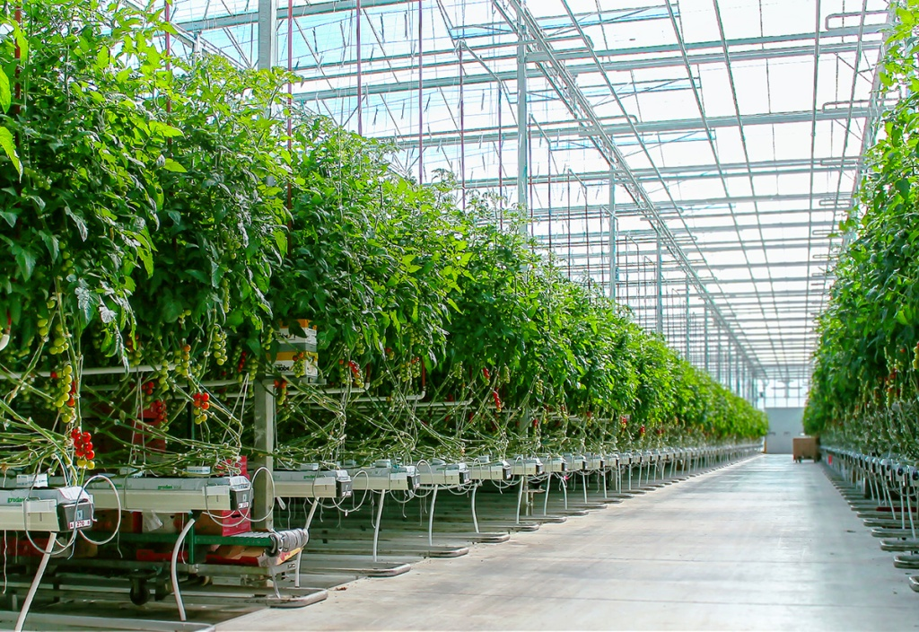 industrial greenhouse.jpg